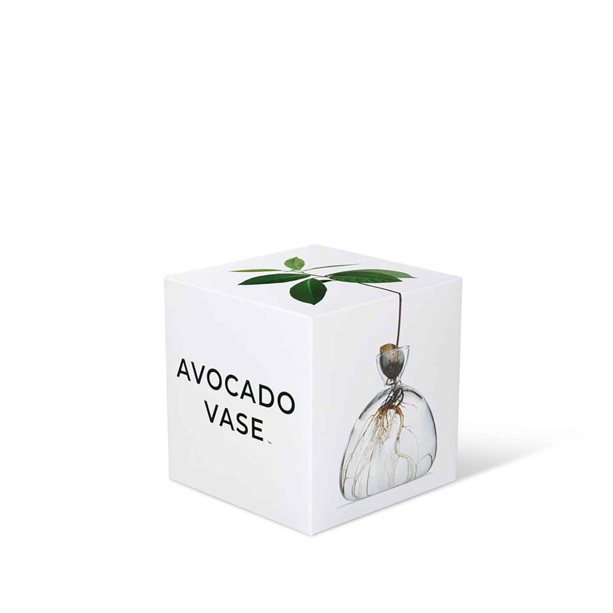 AvocadoVase3cc