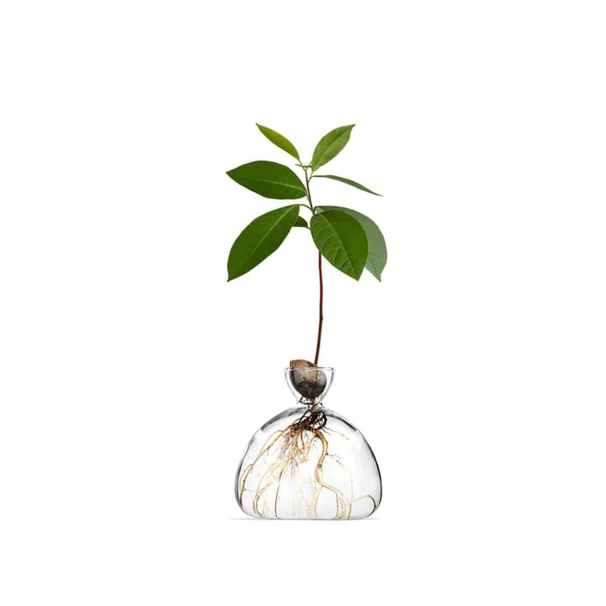 AvocadoVase_V1
