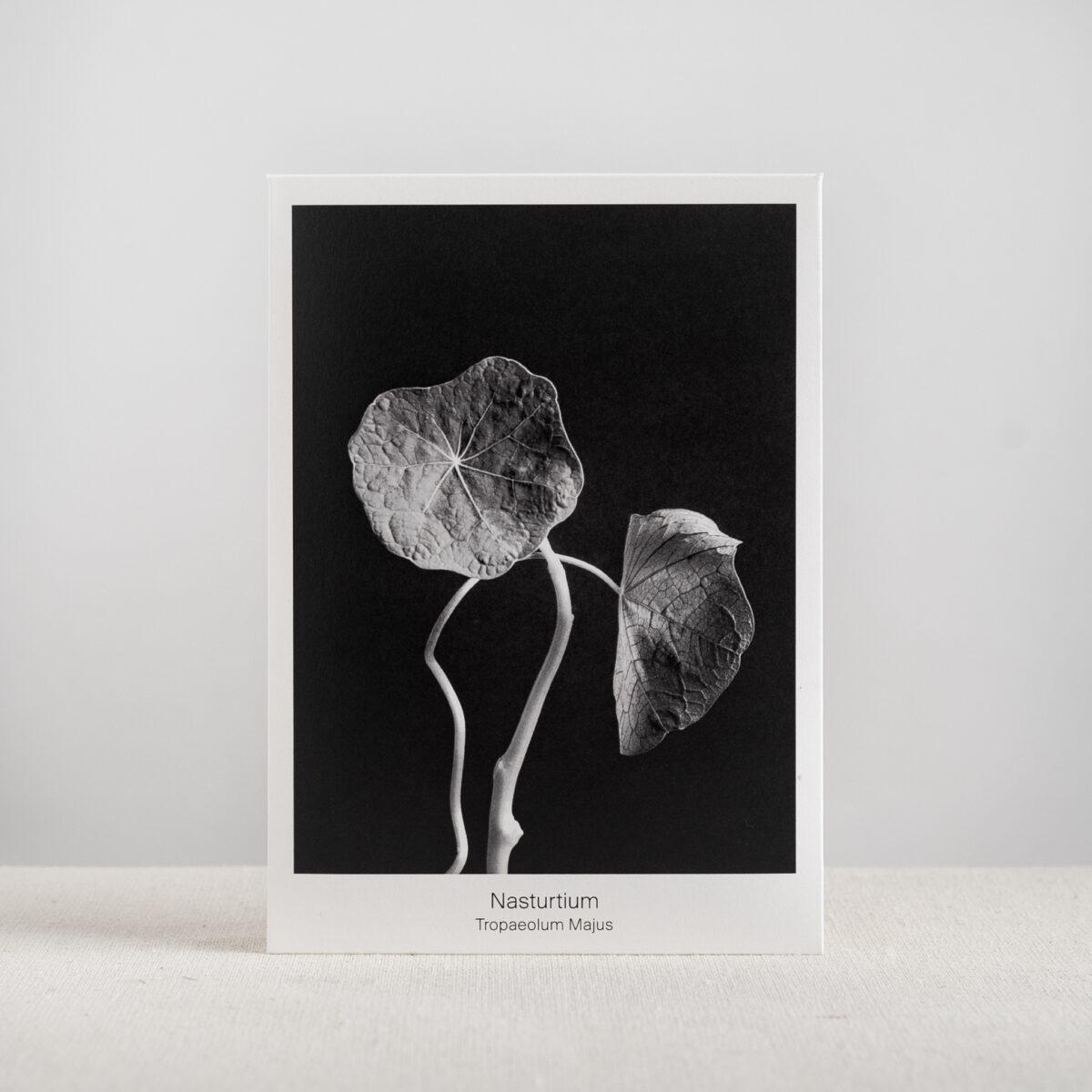 Graen-Studios-Product-Image-Nasturtium-Seed-Packet