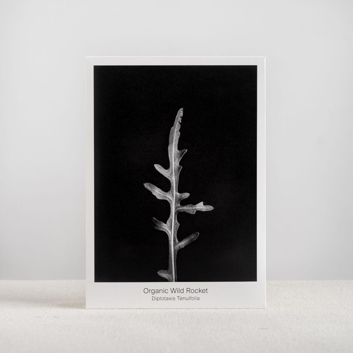 Graen-Studios-Product-Image-Organic-Wild-Rocket-Seed-Packet.jpg