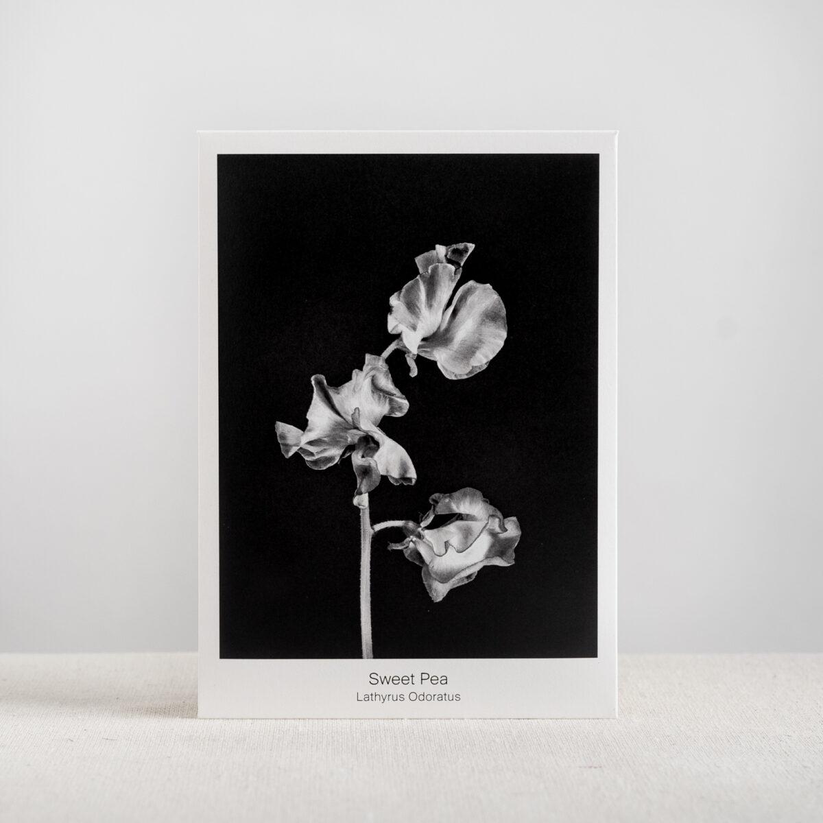 Graen-Studios-Product-Image-Sweet-Pea-Seed-Packet.jpg